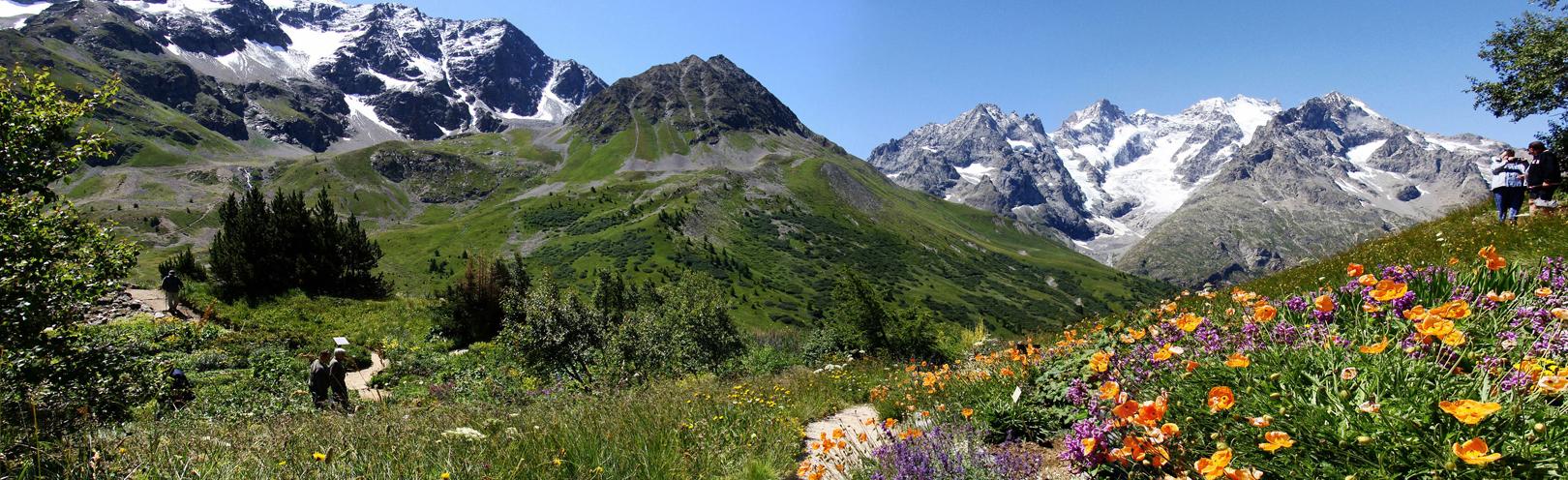 32  Jardin Alpin du Lautaret