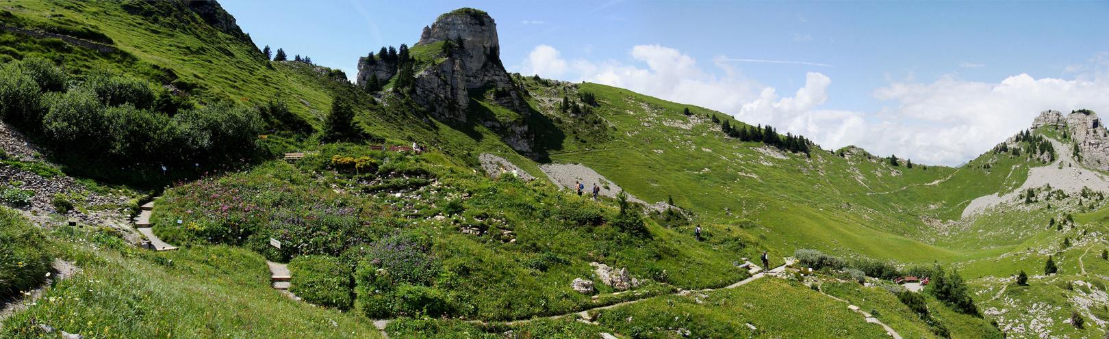 29 Jardin alpin Schynige Platte