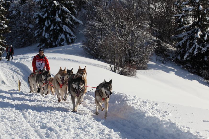 05 La Grande Odyssée  Savoie Mont-Blanc 2014