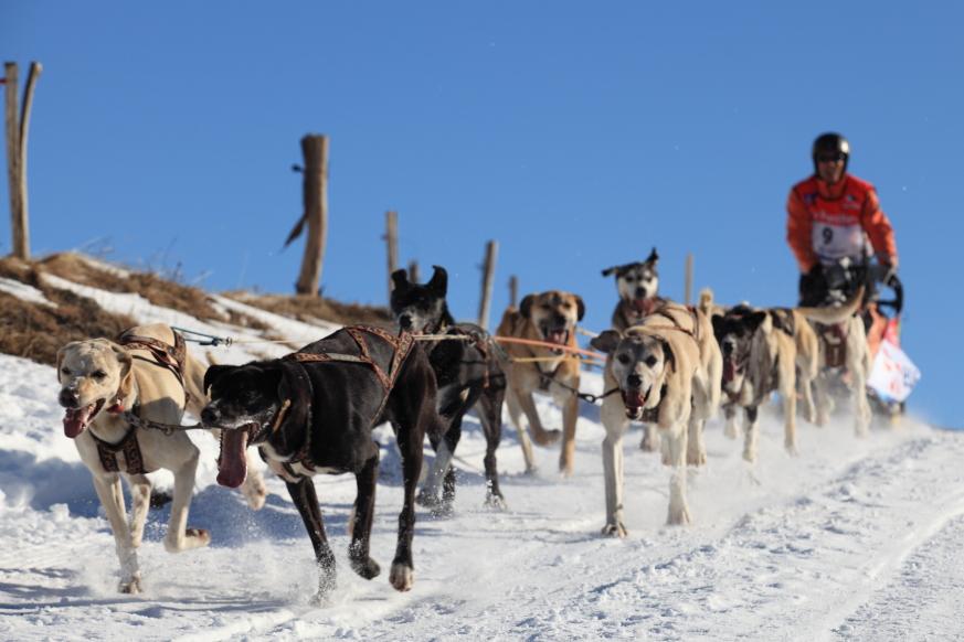 11 La Grande Odyssée Savoie Mont-Blanc 2012