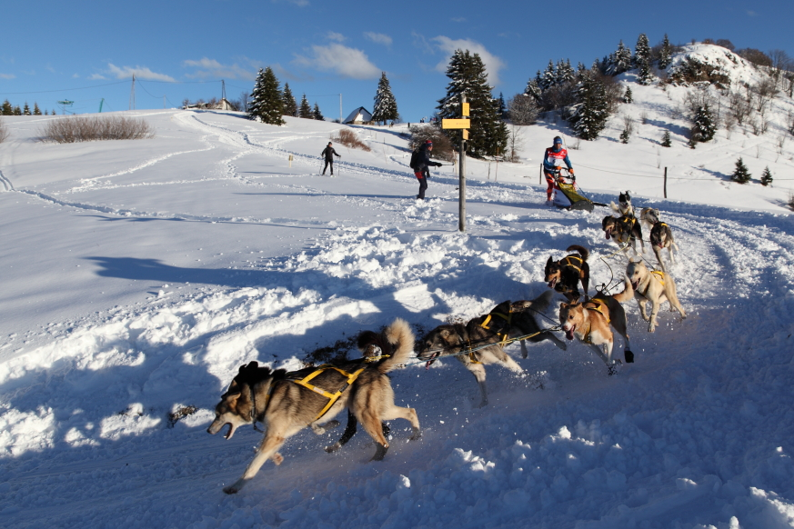 11 La Grande Odyssée  Savoie Mont-Blanc 2014