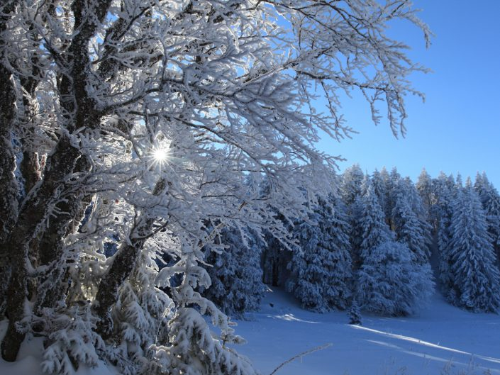 Nouvel an dans les Alpes